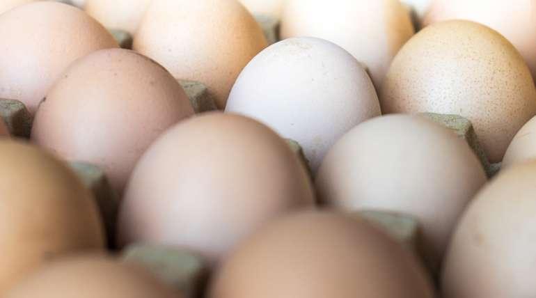 7 factores que impactan en la producción de huevos